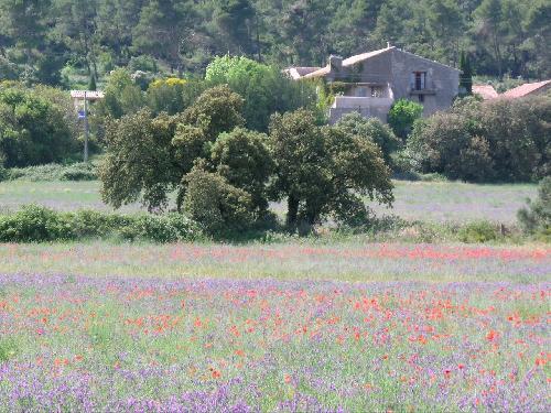 Tres Beau Domaine proche de Saint Rémy